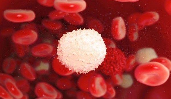 leucociti1