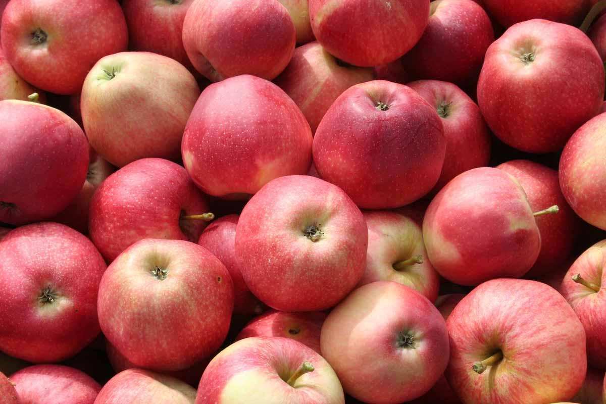 Meglio la mela con la buccia o quella sbucciata?