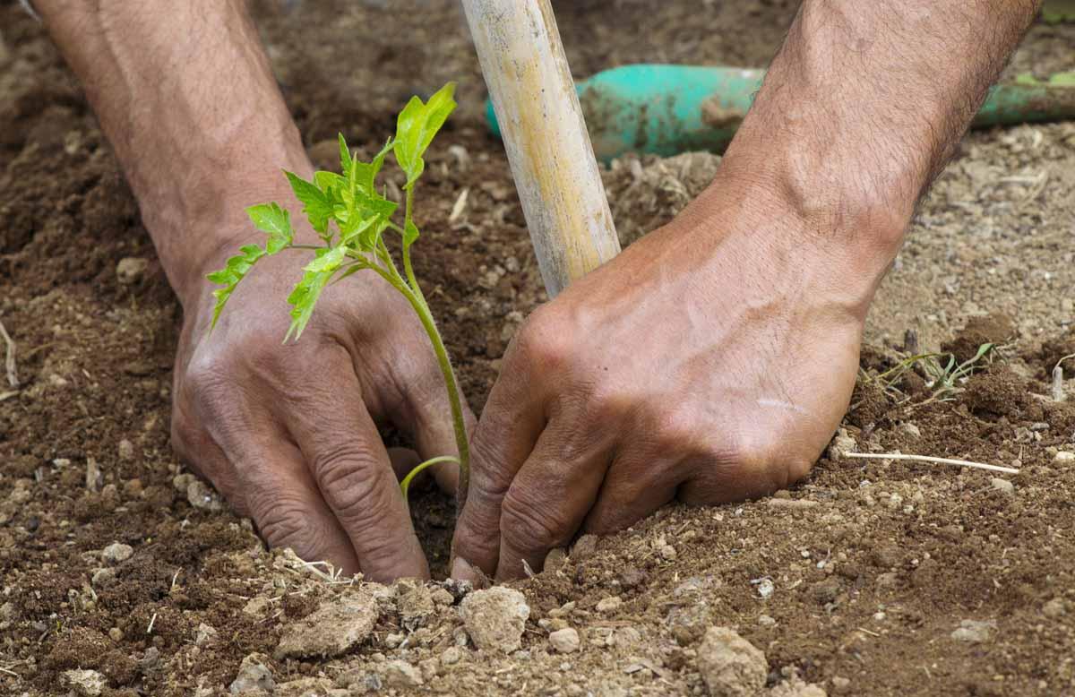 I prodotti dell'orto sinergico: dalla terra alla tavola