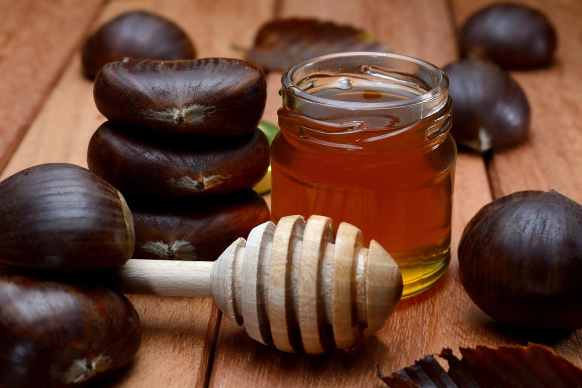 Miele di castagno: origine e caratteristiche
