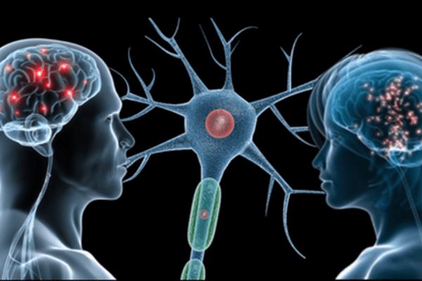 Neuroni archivi inran - Neuroni specchio empatia ...