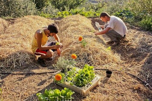 Orto sinergico cos e come si coltiva for Cosa piantare nell orto adesso