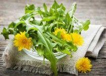 tarassaco-insalata-fiori-bcm
