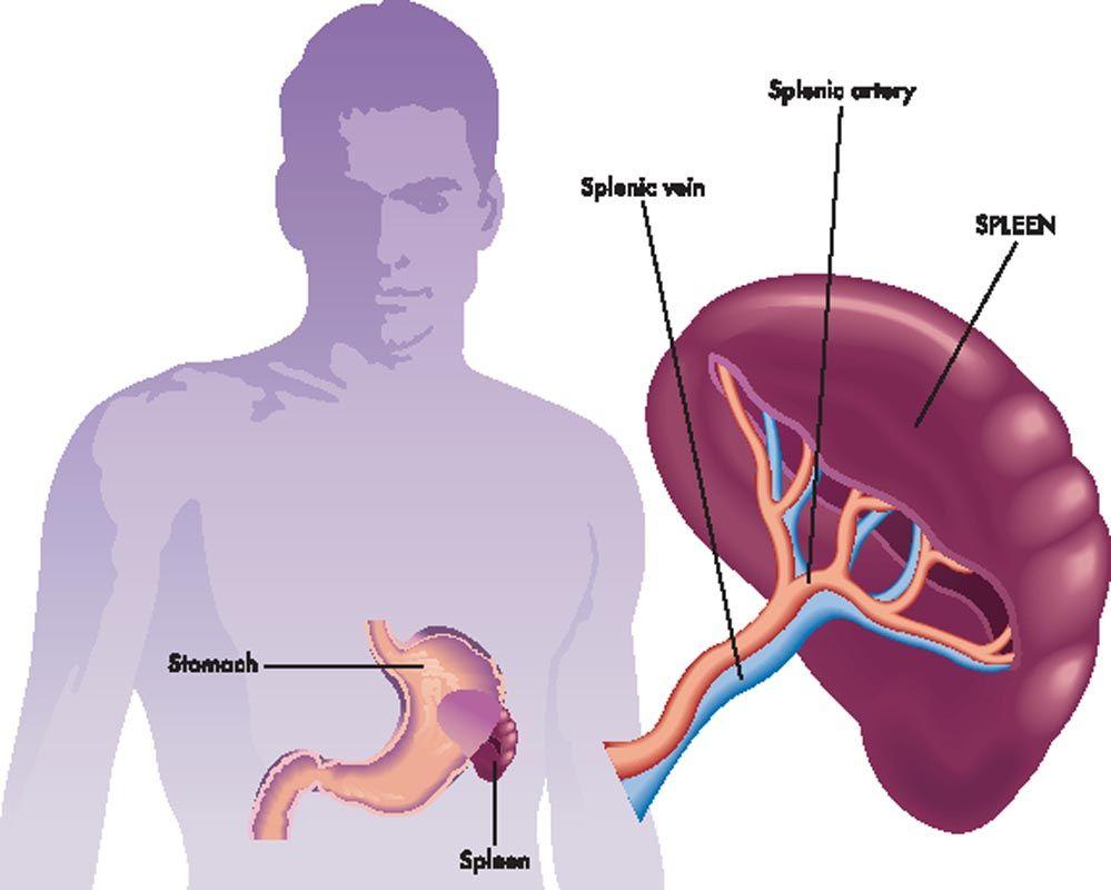 Piastrinopenia: sintomi