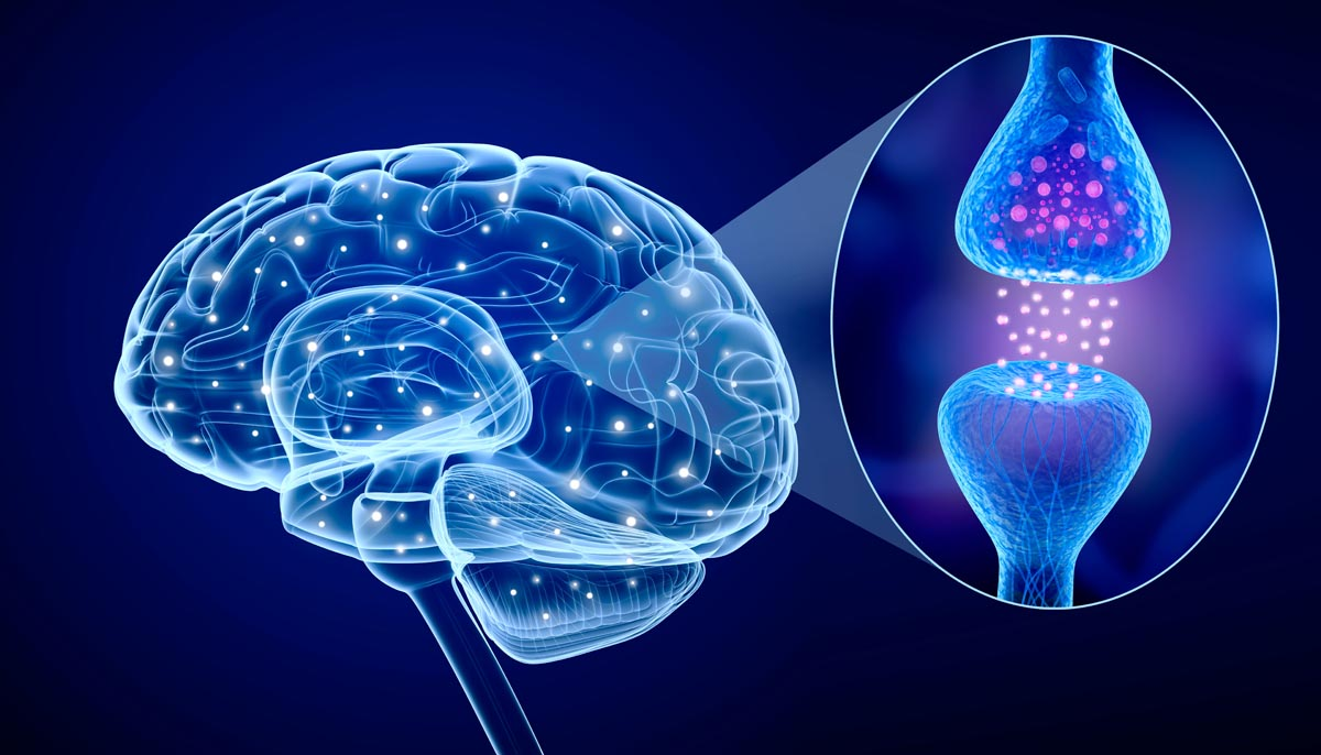 Neuroni specchio cosa sono