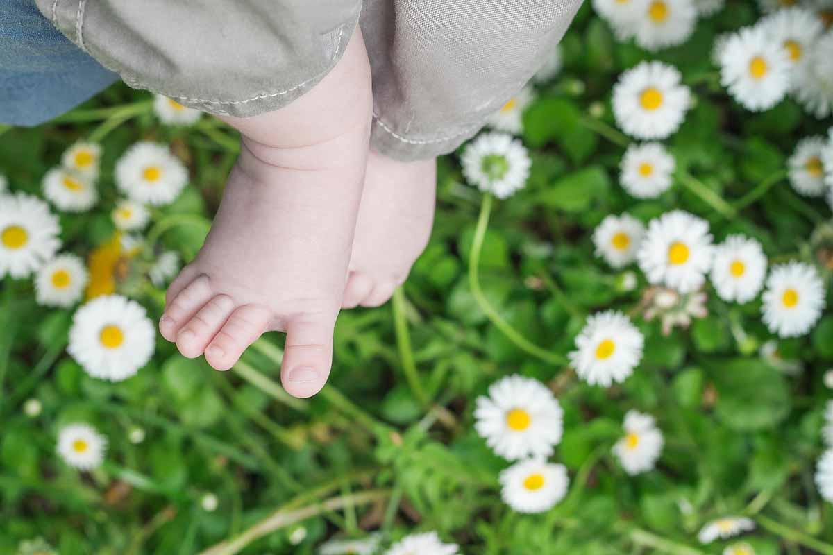 Come preparare la camomilla neonati