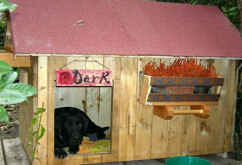 cucce per cani da esterno le cose da sapere