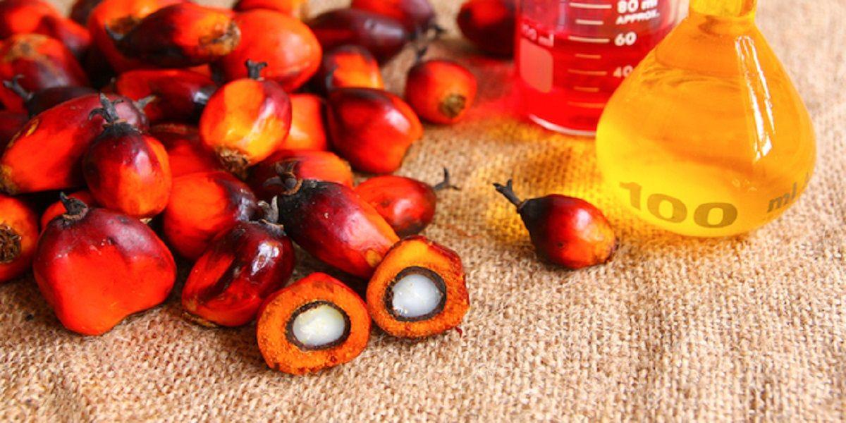 olio di palma non idrogenato