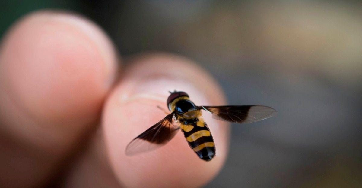 puntura di ape