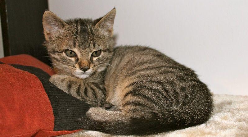 tigna-del-gatto-1
