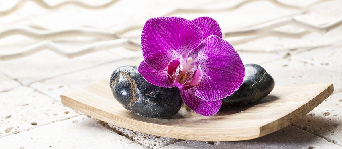 come curare le orchidee: come fare