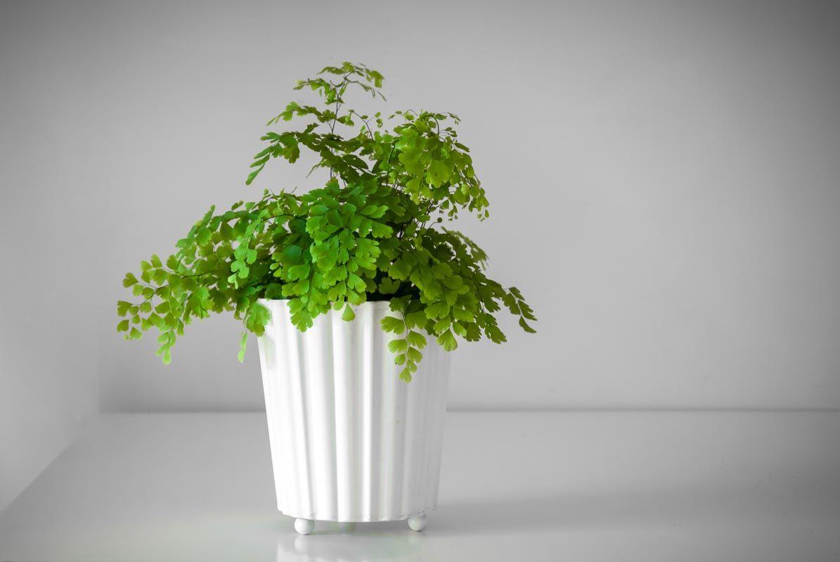 Dove mettere la pianta in casa