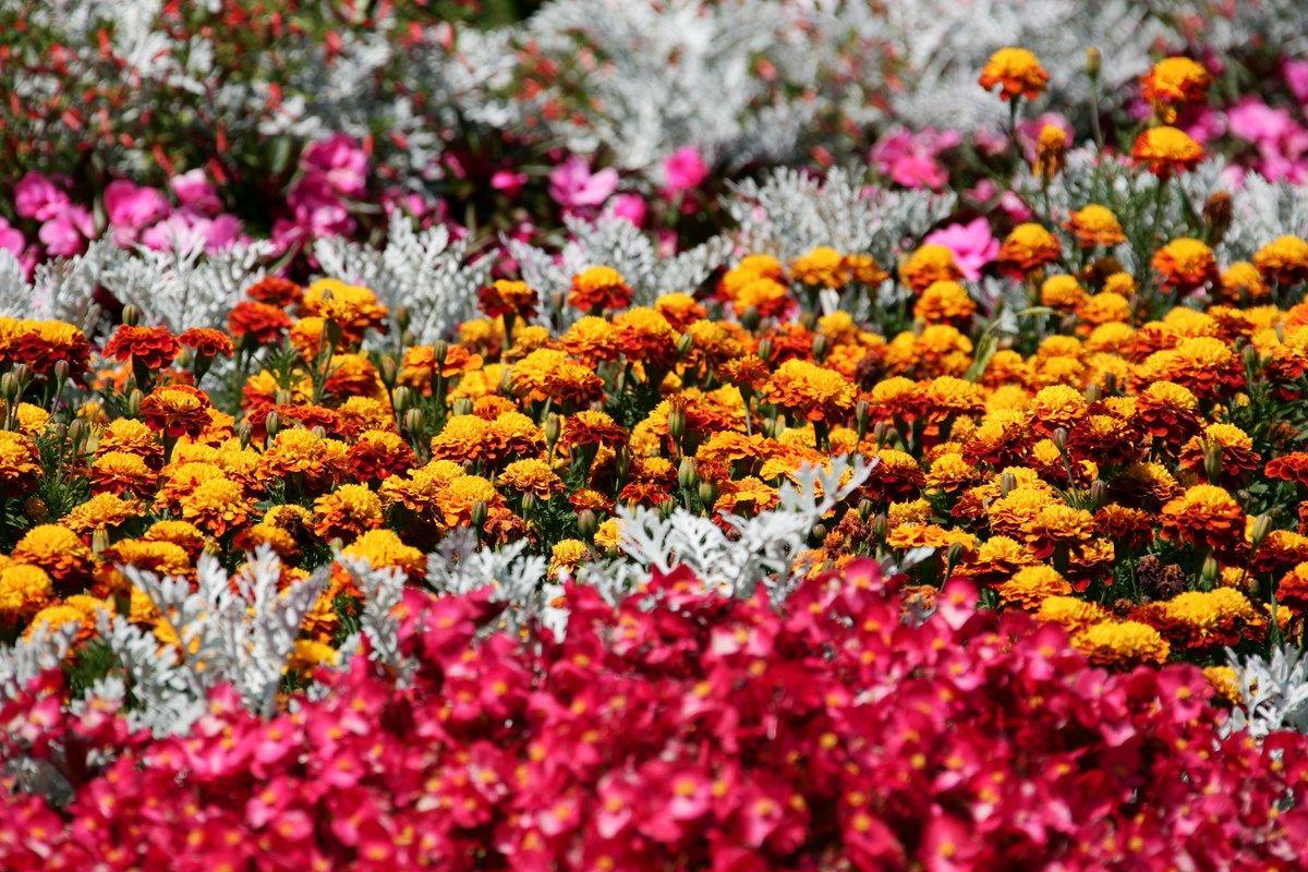 aiuole fiorite: delineare i controni