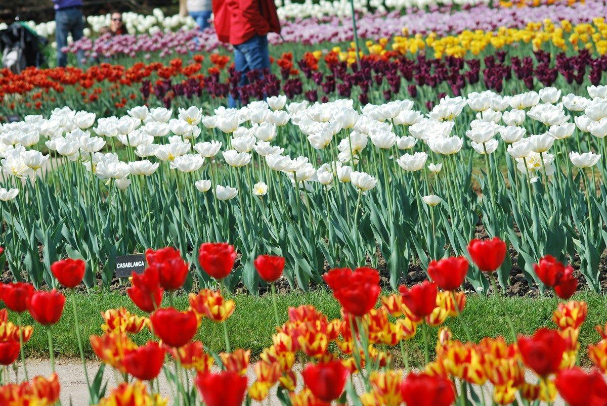 aiuole fiorite: la preparazione