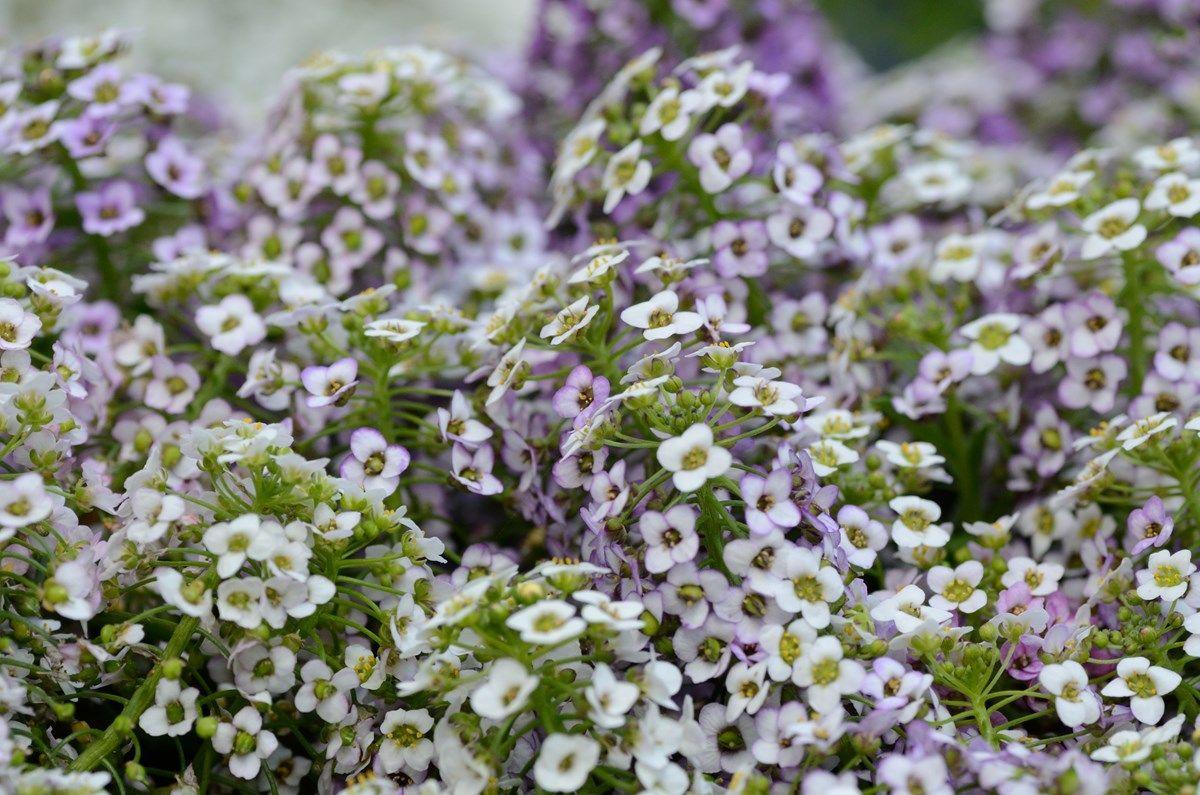 aiuole fiorite: tipologia del terreno