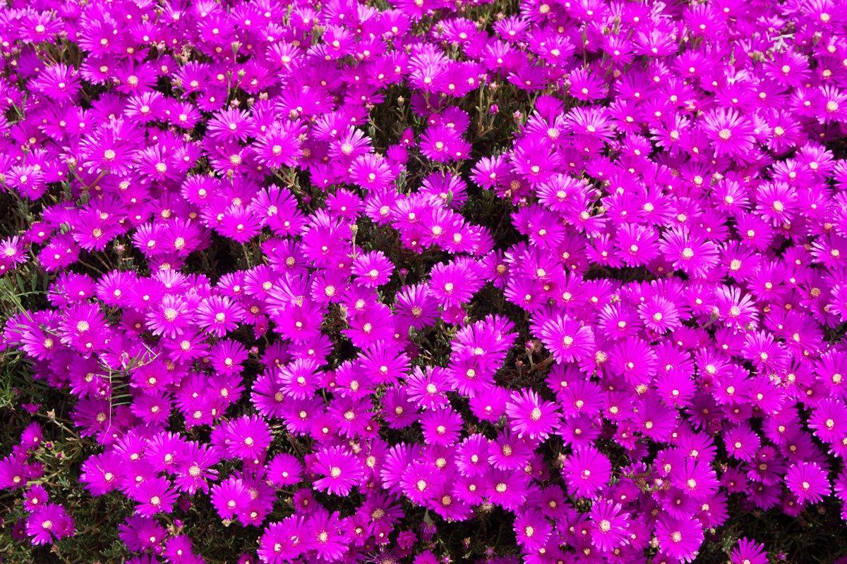 aiuole fiorite: l'organizzazione