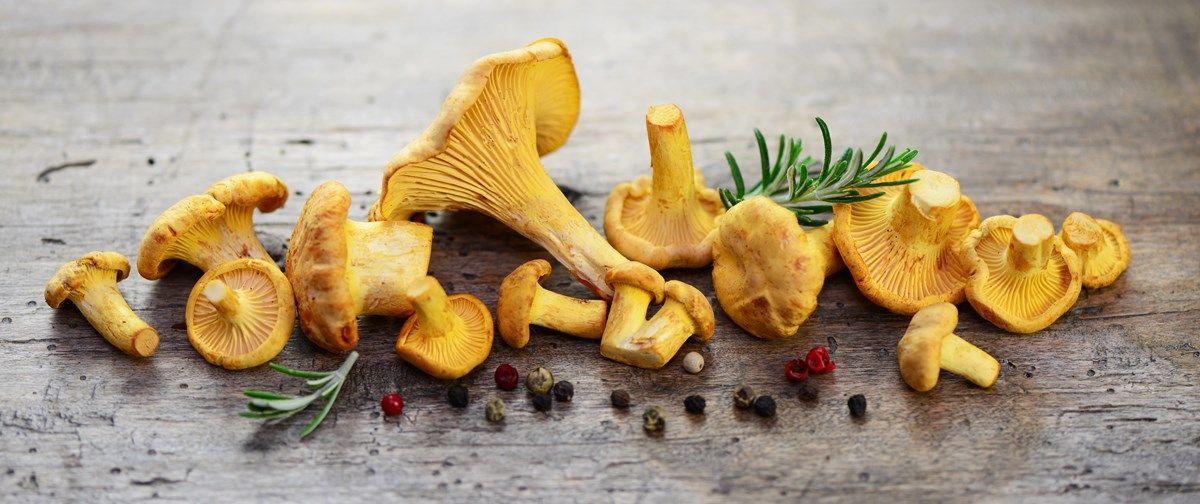 funghi commestibili: i falasi miti sui funghi