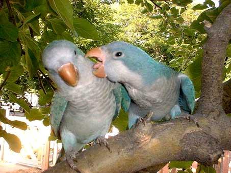 2-monaci-blu