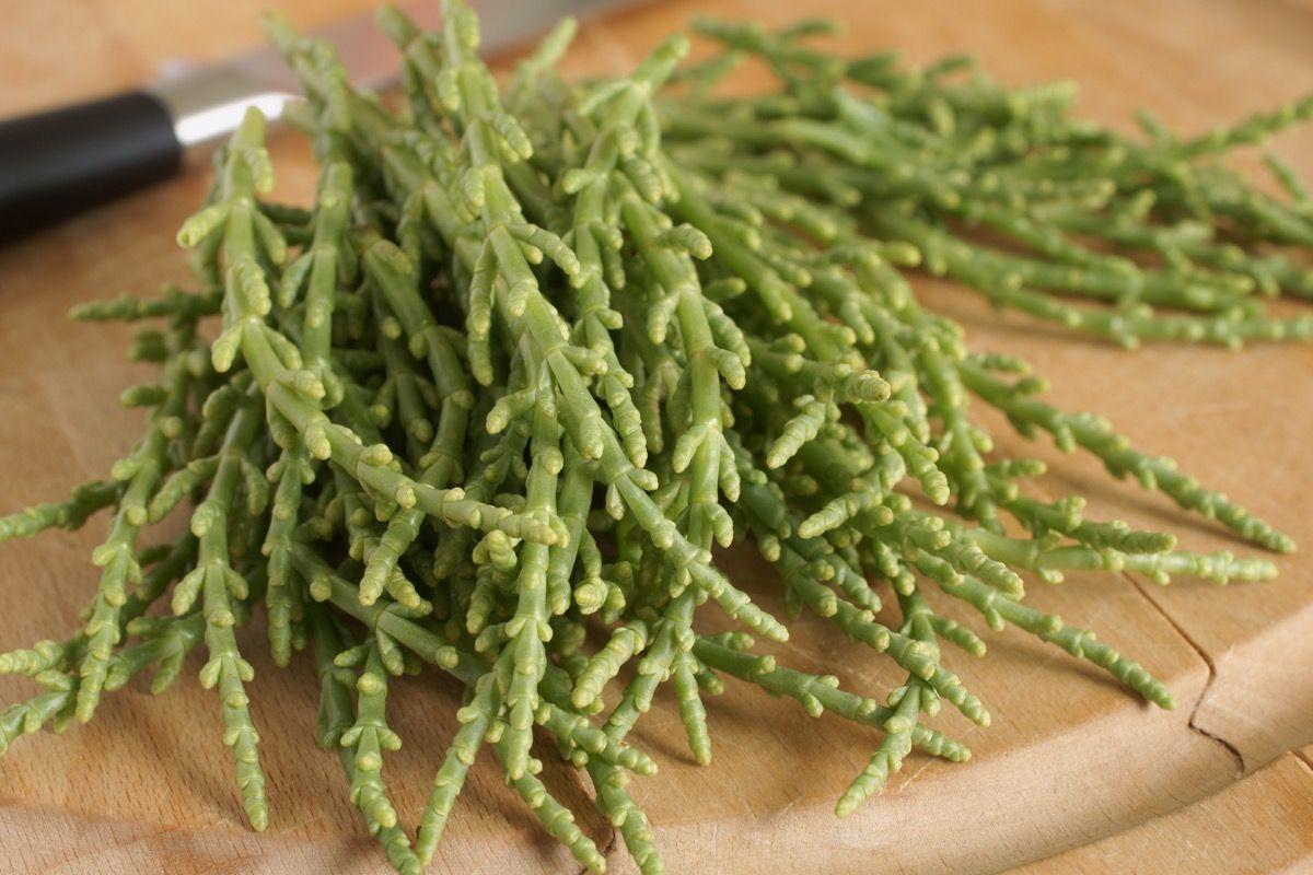 Salicornia: benefici, usi e controindicazioni1200 x 800 jpeg 220kB