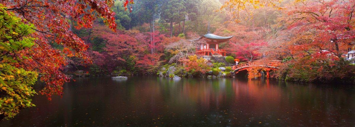 acero giapponese: coltivarlo in vaso