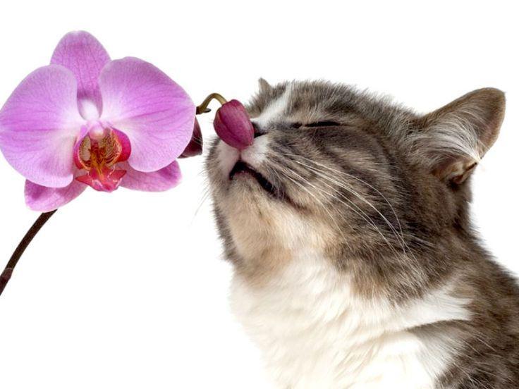 aromaterapia-per-gatti