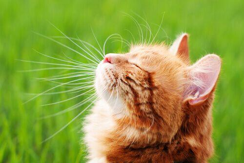 repellenti-caserecci-gatti