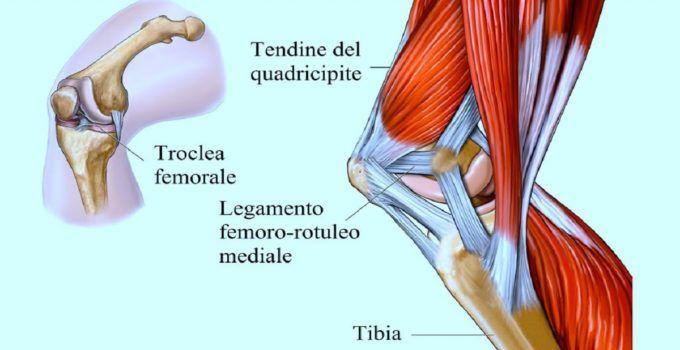 tendine rotuleo