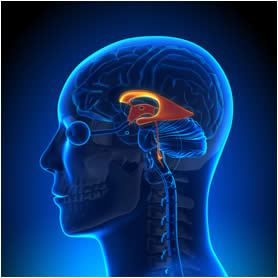 ventricoli-cerebrali
