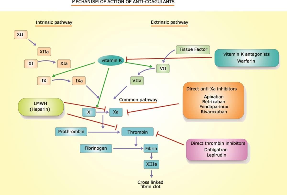 la struttura molecolare dell'Eparina