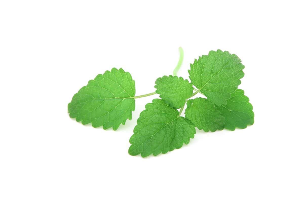 antiacido naturale: gli estratti vegetali