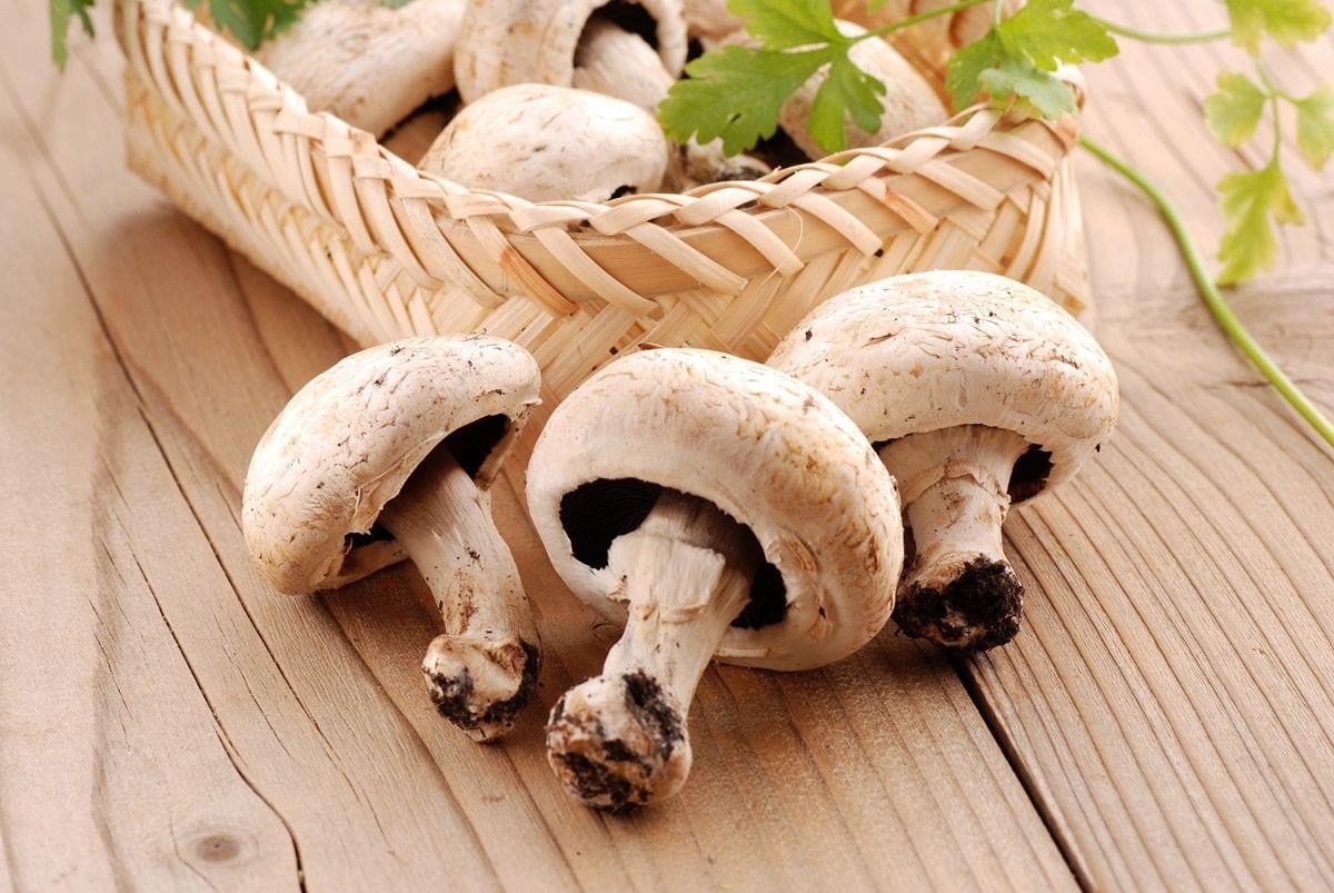 coltivazione dei funghi prataioli