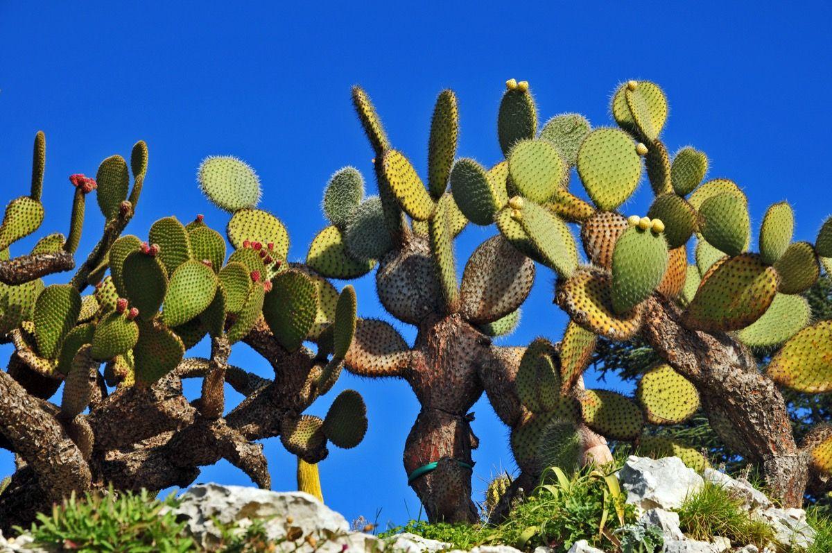 Piante Piccole Da Giardino piante grasse da esterno: come coltivarle