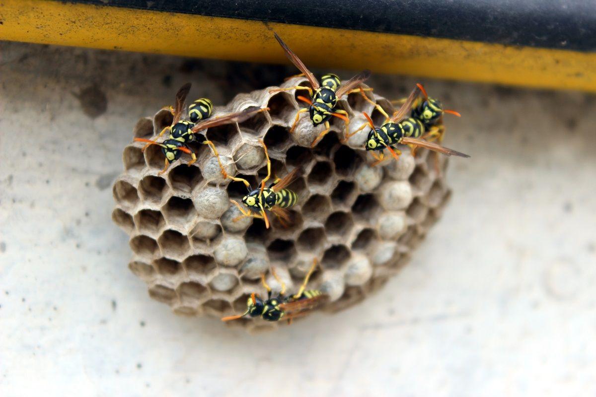 i sintomi della Puntura di vespa