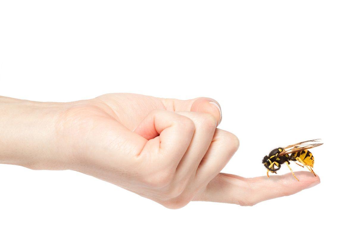Puntura di vespa sintomi e cosa fare for Puntura vespa cane