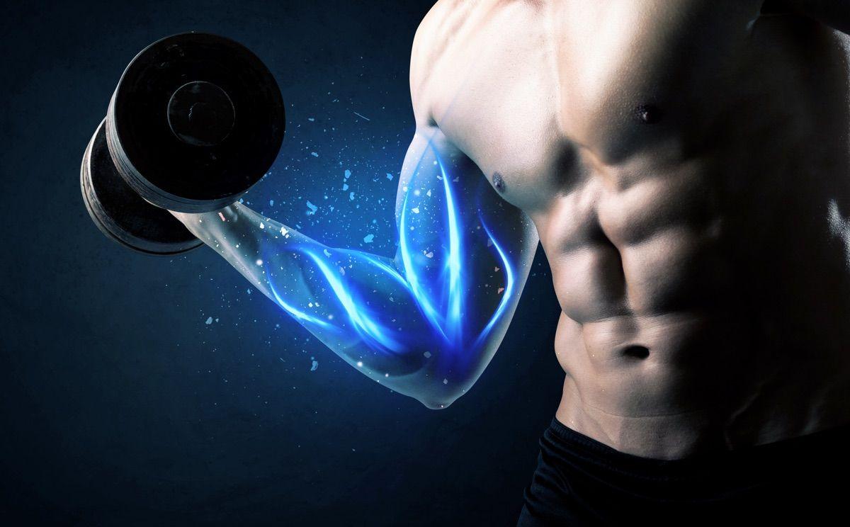 muscolo stampabile