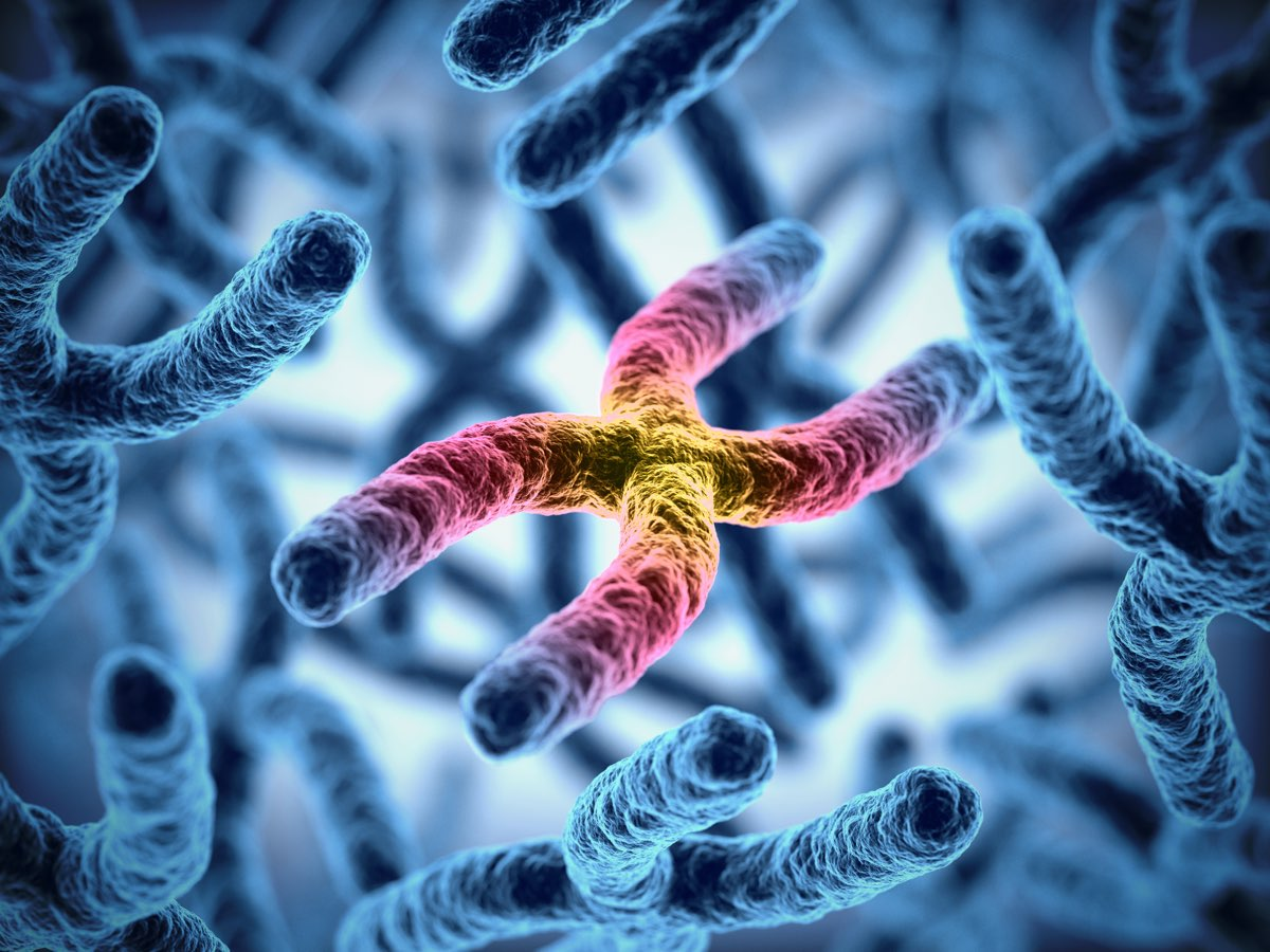 Cellule diploidi e cromosomi omologhi