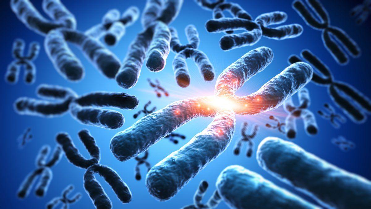 Cromosomi omologhi