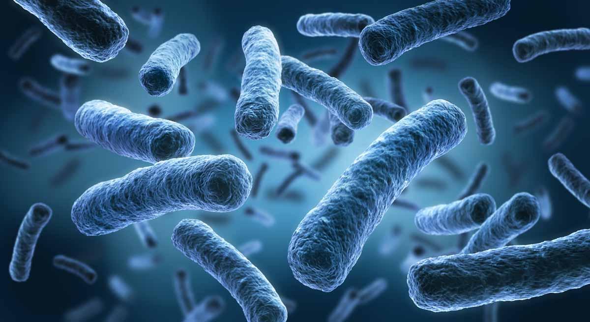caratteristiche dei procarioti