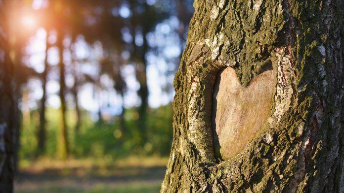 abitudini che fanno bene al cuore