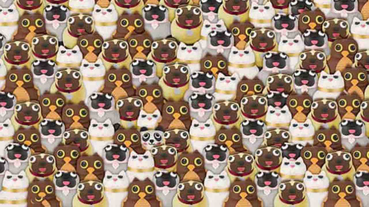 Test visivo panda cani gatti gufi