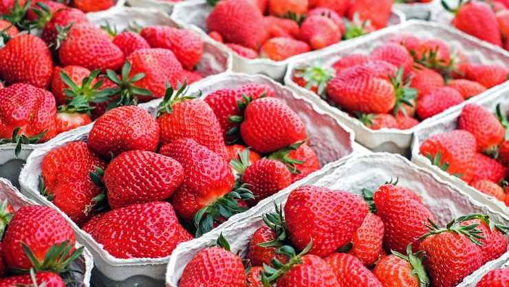 Proprietà delle fragole: benefici, rischi e tante ricette gustose