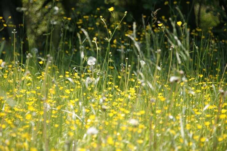 Pollini e fiori