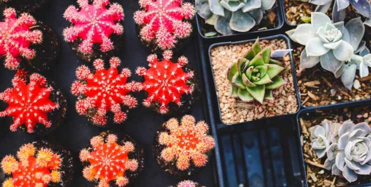 piante e fiori da regalare alla festa della mamma