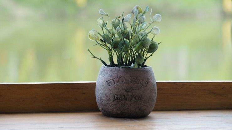 uova uovo crudo in vasi piante casa