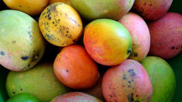 cucina cuoco trucchi cucinare piatti tagliare sbucciare mango
