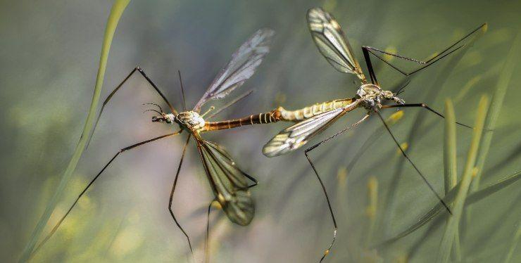 repellenti per zanzare quali scegliere