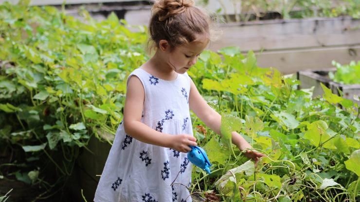 bambina giardino piante tenere lontano vespe calabroni