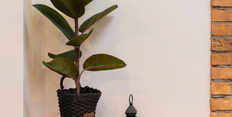 piante che depurano l'aria