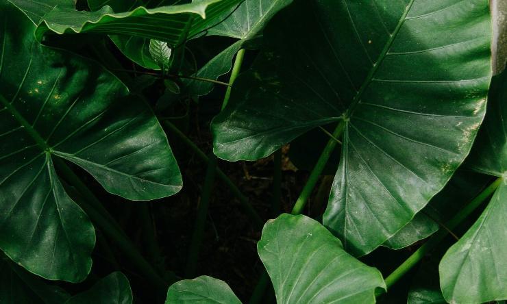 foglie di pianta