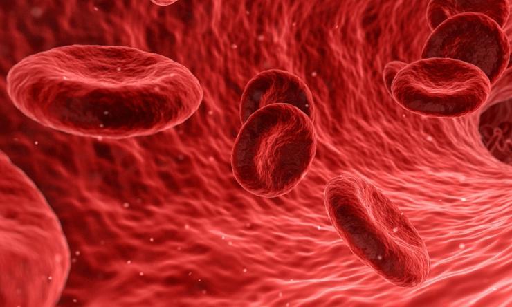 circolazione di sangue